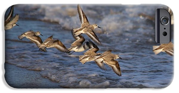 Mashpee iPhone Cases - Sandpipers in Flight iPhone Case by Allan Morrison
