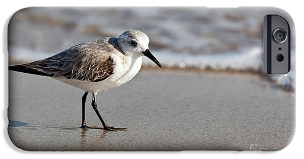 Michelle iPhone Cases - Sandpipers Secrets iPhone Case by Michelle Wiarda
