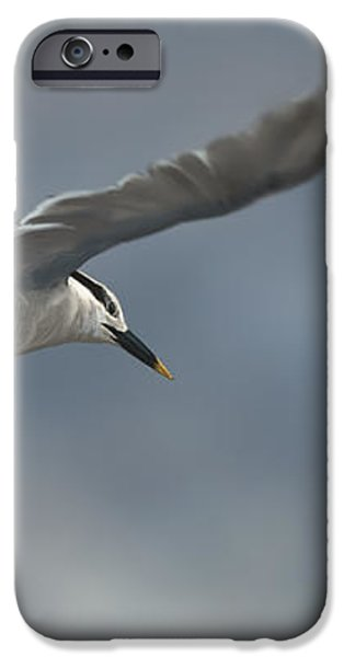 Sandwich Tern iPhone Case by Aaron Blaise