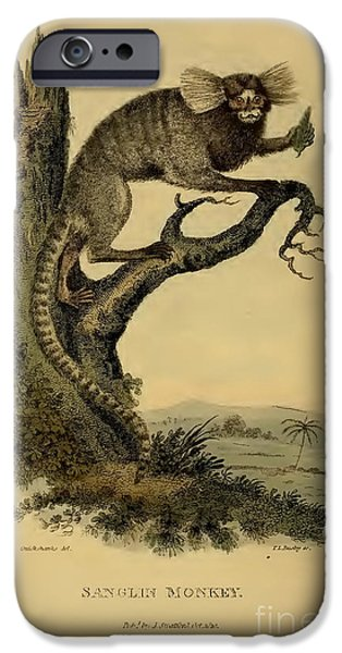 Zoological Paintings iPhone Cases - Sanglin Monkey circa 1820 iPhone Case by Busby