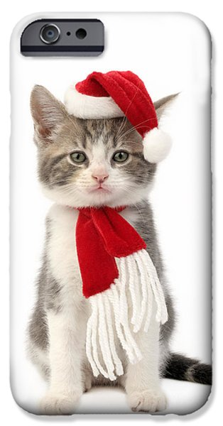 Pet Photography iPhone Cases - Santa Cat iPhone Case by Greg Cuddiford