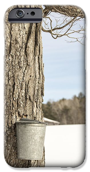 Pail iPhone Cases - Sap bucket on maple tree iPhone Case by Edward Fielding