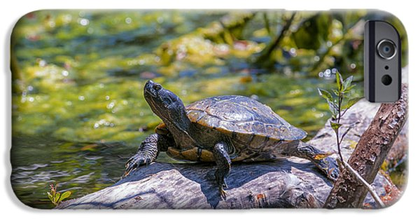 Slider Photographs iPhone Cases - Sardis Pond Turtle iPhone Case by Sharon  Talson