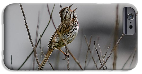 Quoddy iPhone Cases - Savannah Sparrow iPhone Case by Marty Saccone