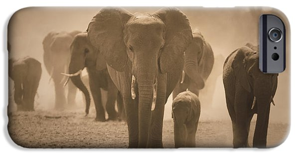 States Reliefs iPhone Cases - Save the Elephants iPhone Case by Raphael  Sanzio