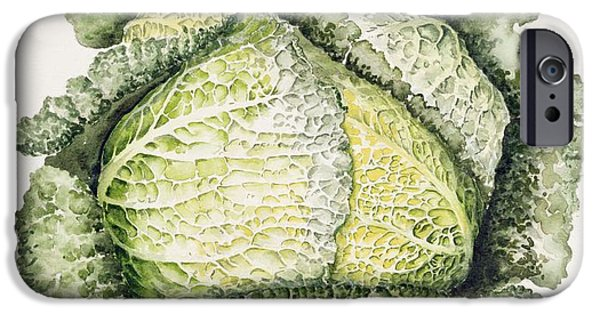 Botanical Photographs iPhone Cases - Savoy Cabbage Wc iPhone Case by Alison Cooper
