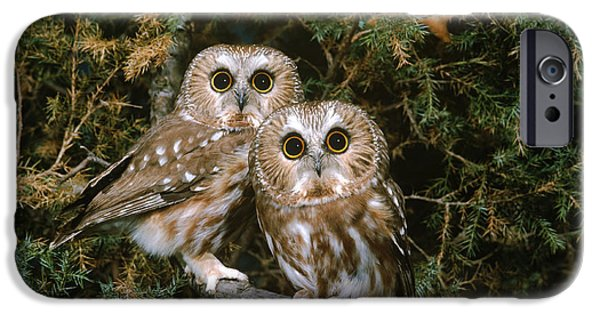 Fauna iPhone Cases - Saw-whet Owls iPhone Case by G Ronald Austing
