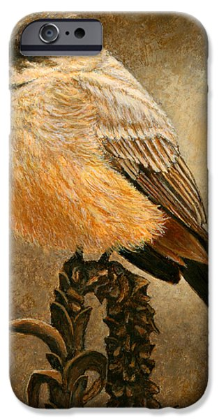 Aceo iPhone Cases - Says Phoebe iPhone Case by Ellen Strope