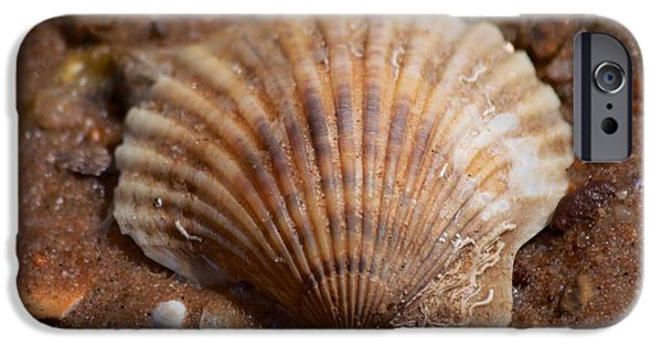 Mashpee iPhone Cases - Scallop Shell iPhone Case by Allan Morrison