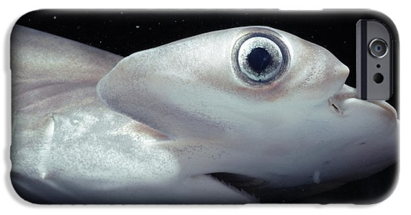 Fish Photographs iPhone Cases - Scalloped Hammerhead Shark iPhone Case by Jeff Rotman