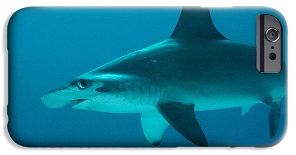 Fish Photographs iPhone Cases - Scalloped Hammerhead Shark School Cocos iPhone Case by Flip Nicklin
