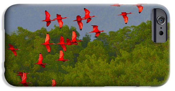 Mangrove Forest iPhone Cases - Scarlet Ibis iPhone Case by Tony Beck