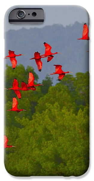 Scarlet Ibis iPhone Case by Tony Beck