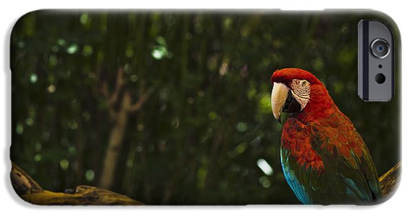 Design iPhone Cases - Scarlet Macaw Profile iPhone Case by Bradley R Youngberg