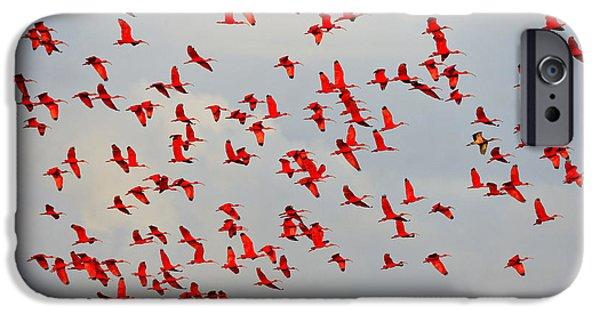 Mangrove Forest iPhone Cases - Scarlet Sky iPhone Case by Tony Beck