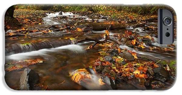 Creek iPhone Cases - Scattered Leaves iPhone Case by Mike  Dawson