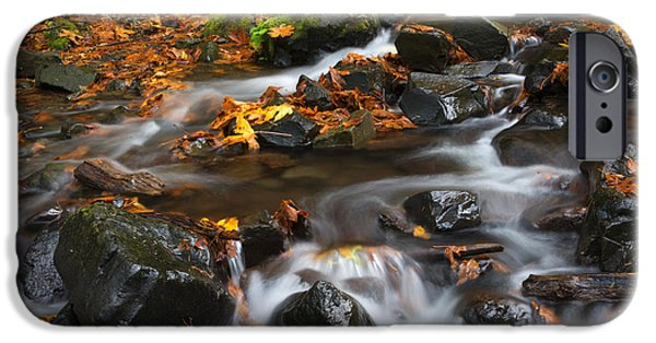 Maple Season iPhone Cases - Scattered Seasons iPhone Case by Mike Dawson
