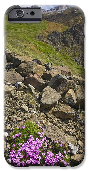 Purple Images iPhone Cases - Scenic View Of Moss Campion Wildflowers iPhone Case by Jim Kohl