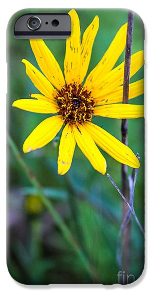 Bayside iPhone Cases - Schlitz Wild Flower iPhone Case by Andrew Slater
