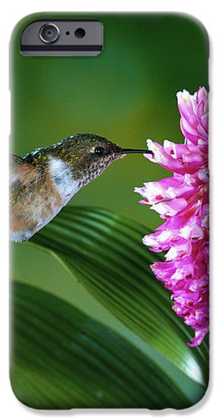 Scintillant Hummingbird Selasphorus iPhone Case by Michael and Patricia Fogden