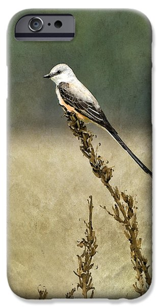Flycatcher iPhone Cases - Scissortailed-Flycatcher iPhone Case by Betty LaRue