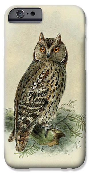 Colored Owls iPhone Cases - Scops Owl  iPhone Case by J G Keulemans