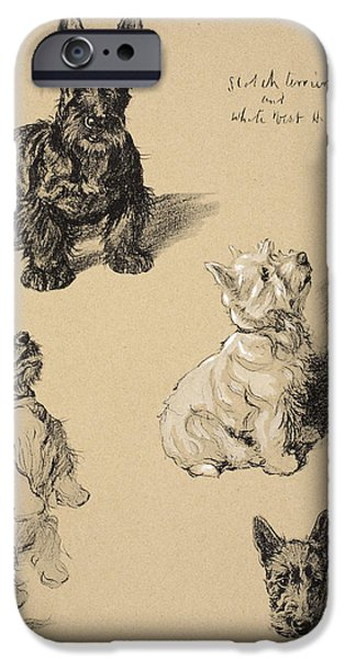 Black Dog iPhone Cases - Scotch Terrier And White West iPhone Case by Cecil Charles Windsor Aldin