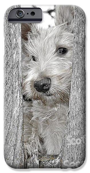 Scottish Terrier Puppy iPhone Cases - Scottie Security iPhone Case by Image Takers Photography LLC - Laura Morgan