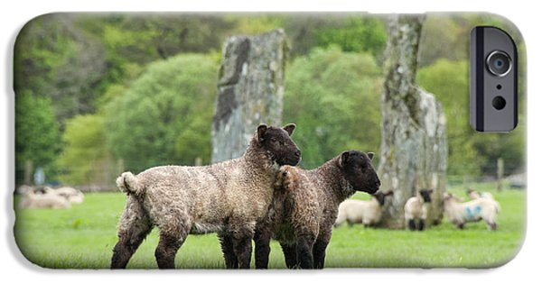 Ruin iPhone Cases - Scottish Sheep iPhone Case by Juli Scalzi