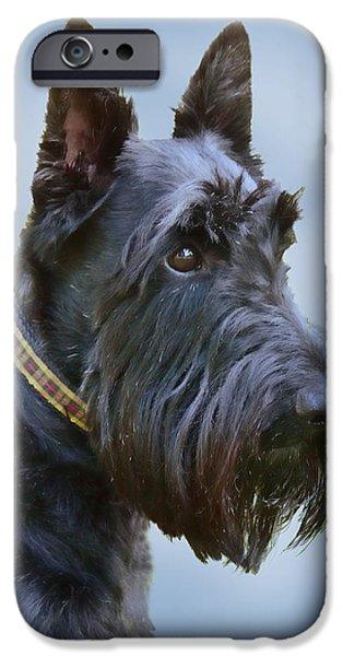 Scottish Terrier Dog iPhone Case by Jennie Marie Schell