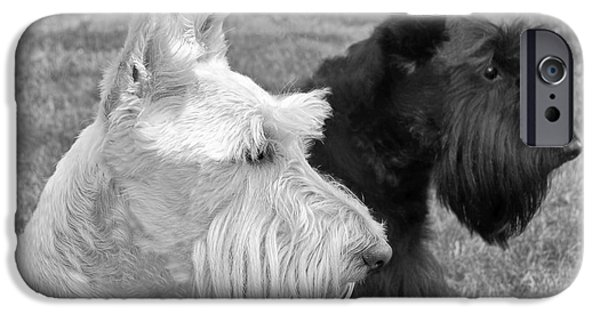 Scottish Terrier Art iPhone Cases - Scottish Terrier Dogs Black and White iPhone Case by Jennie Marie Schell