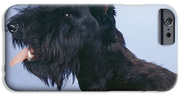 Dog Close-up iPhone Cases - Scottish Terrier iPhone Case by John Daniels
