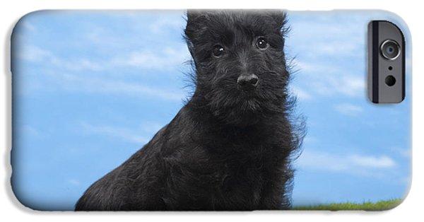 Scottish Terrier Puppy iPhone Cases - Scottish Terrier Puppy iPhone Case by Jean-Michel Labat