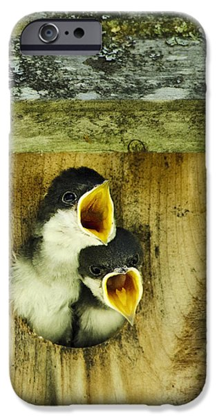 Baby Bird iPhone Cases - Screaming Hungry iPhone Case by Christina Rollo