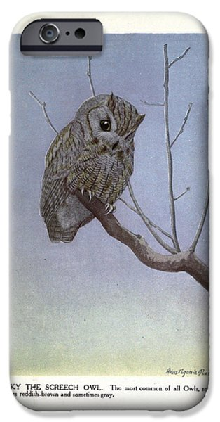 Dentist Drawings iPhone Cases - Screech Owl iPhone Case by Philip Ralley