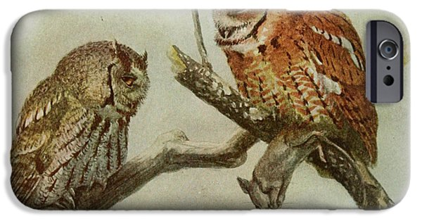 Ornithology iPhone Cases - Screech Owls iPhone Case by Louis Agassiz Fuertes
