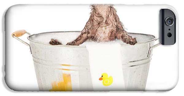 Dogs iPhone Cases - Scruffy Terrier in a Bath Tub iPhone Case by Susan  Schmitz