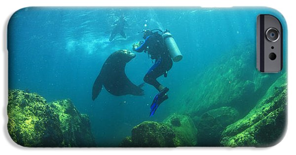 35-39 Years iPhone Cases - Scuba Divers With Sea Lions Underwater iPhone Case by Stuart Westmorland