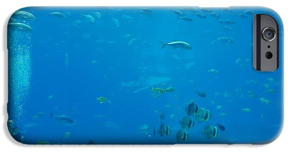 Nature Study iPhone Cases - Scuba Diving iPhone Case by Dan Sproul