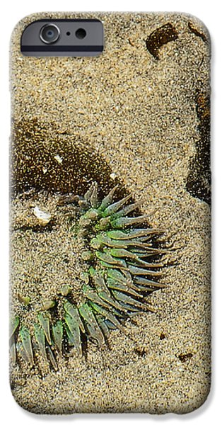 Sea Anenome Half Buried in the Sand iPhone Case by Artist and Photographer Laura Wrede