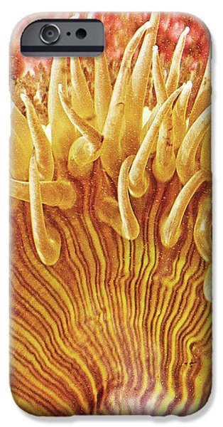 Sea Anenome Stretch iPhone Case by Artist and Photographer Laura Wrede