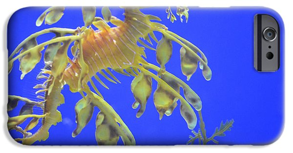 Rare Moments iPhone Cases - Sea Dragon iPhone Case by Randy King