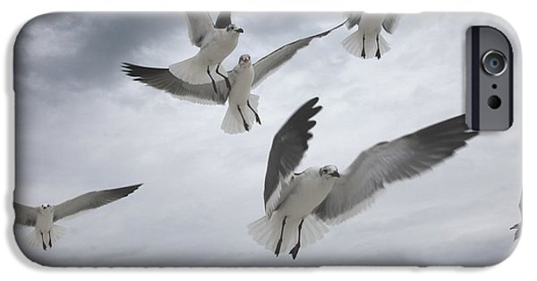 Sea Birds iPhone Cases - Sea Gull Aggression iPhone Case by Joseph G Holland