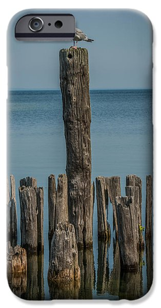 Lakescape iPhone Cases - Sea gull on a Piling iPhone Case by Paul Freidlund