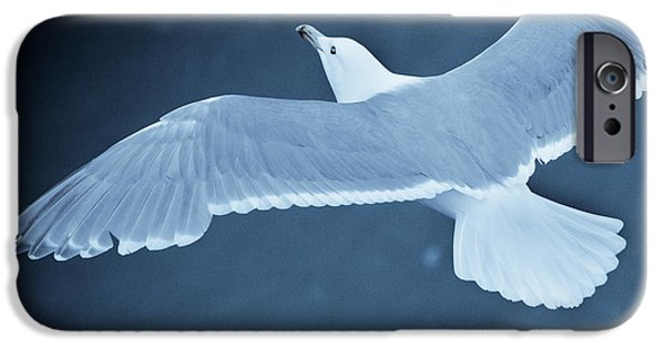 Sea Birds iPhone Cases - Sea Gull Over Icy Water iPhone Case by John Magyar Photography
