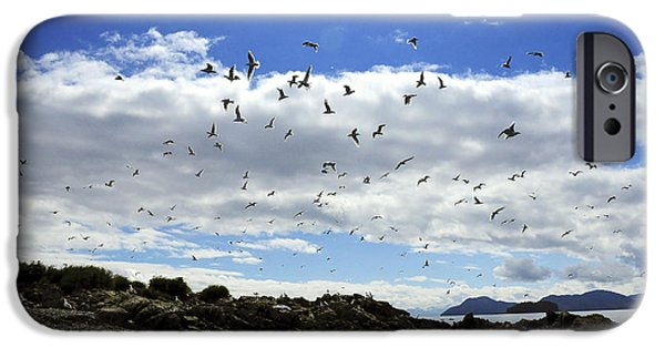Flying Seagull iPhone Cases - Sea Gulls Flying Above The Shoreline Of iPhone Case by Bill Rome