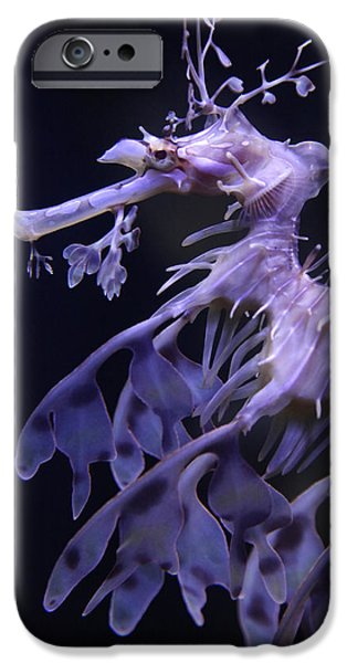 Underwater Photos iPhone Cases - Sea Horse iPhone Case by Donna Corless