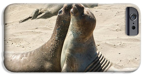 Ano Nusevo iPhone Cases - Sea Lion Love from the book MY OCEAN iPhone Case by Artist and Photographer Laura Wrede
