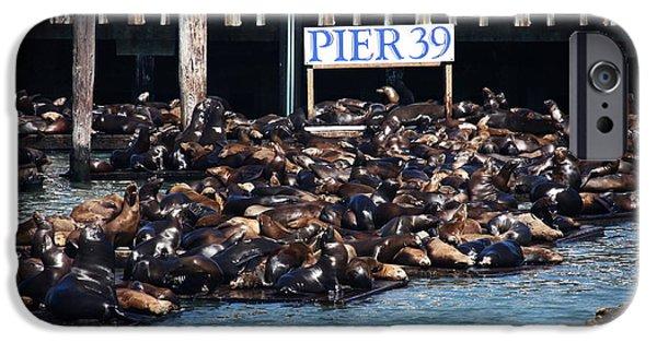 Sea Platform iPhone Cases - Sea Lions At Pier 39 iPhone Case by Aidan Moran