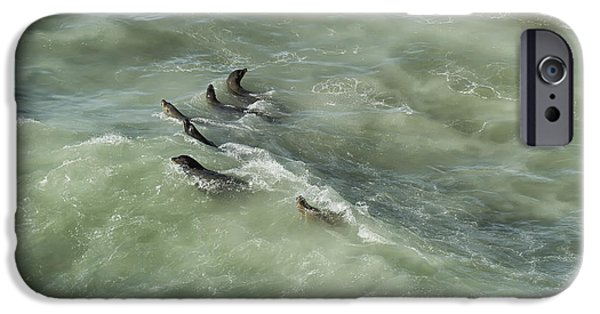 Stellar iPhone Cases - Sea Lions Cavorting in a Green Sea iPhone Case by Belinda Greb